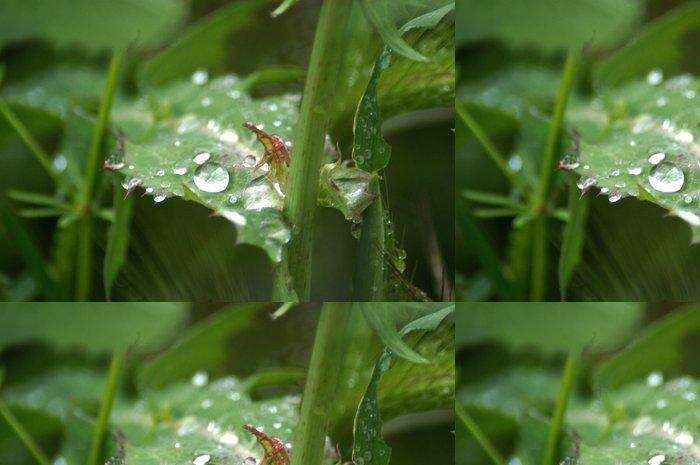Tapeta Pixerstick Gotas de lluvia 03 - Roční období