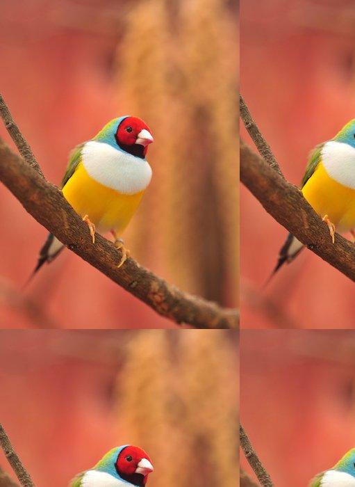 Tapeta Pixerstick Gouldian Finch barevné pták - Témata