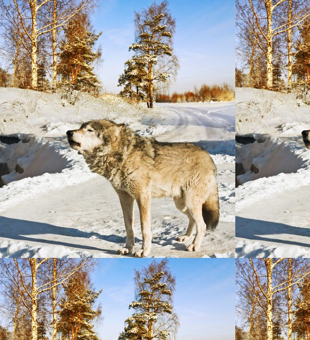 Tapeta Pixerstick Gray Wolf - Témata