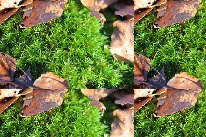 Tapeta Pixerstick Green Moss - Struktury