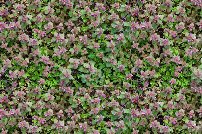 Vinylová Tapeta Green Spring koberců - Rostliny
