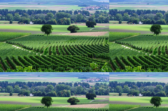 Tapeta Pixerstick Grenn vinice - Zemědělství