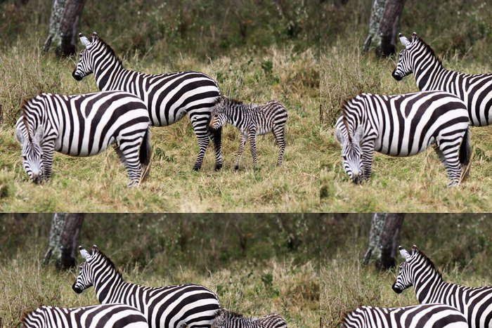 Tapeta Pixerstick Grevy s zebra (Equus grevyi) - Témata