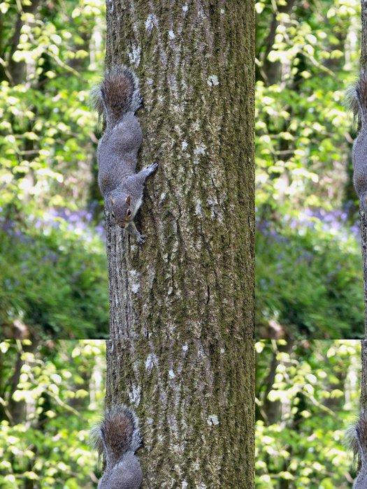 Tapeta Pixerstick Grey Squirrel - Savci