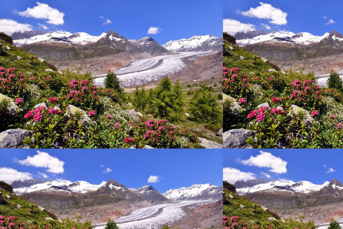 Tapeta Pixerstick Grosser Aletsch ledovci s alpskými růžemi - Evropa