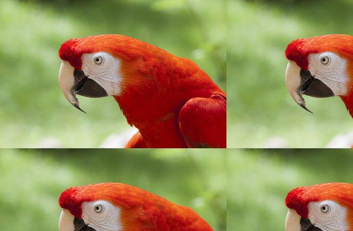 Tapeta Pixerstick Guacamayo Rojo (ara Macao) - Amerika