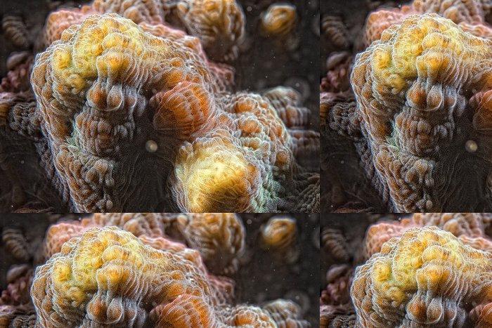 Tapeta Pixerstick Hard korálů makro detail při potápění v Indonésii - Vodní a mořský život