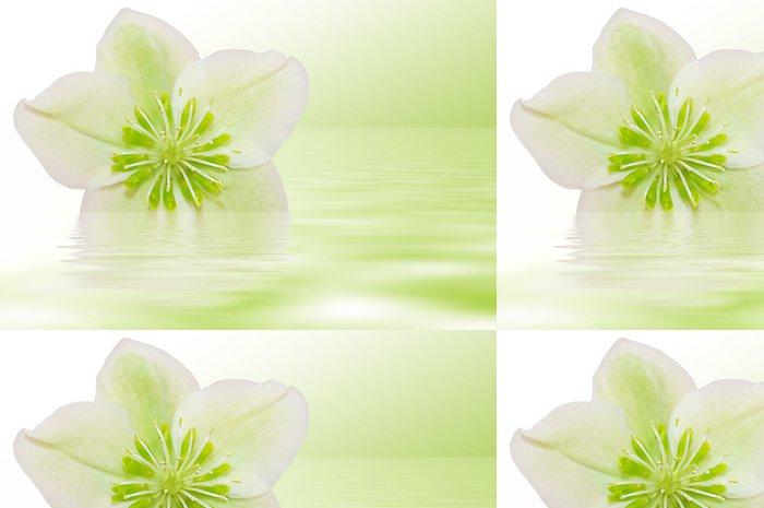 Tapeta Pixerstick Heilende Christrose - Květiny