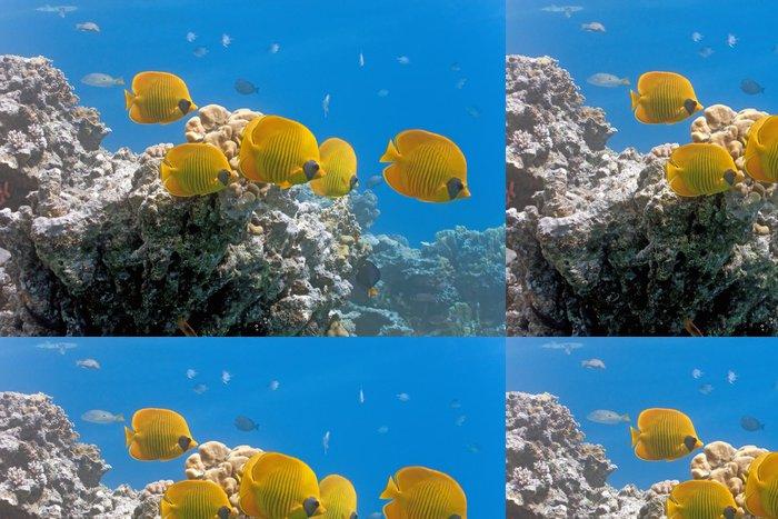 Tapeta Pixerstick Hejno Butterflyfish na útesu - Vodní a mořský život