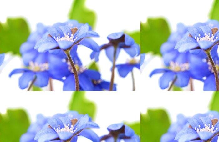 Vinylová Tapeta Hepatica nobilis - Květiny