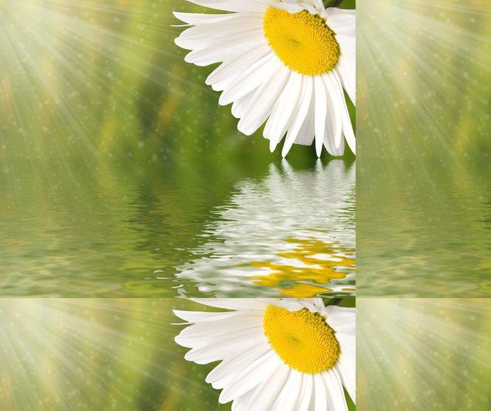 Tapeta Pixerstick Heřmánek květ odráží ve vodě - Květiny