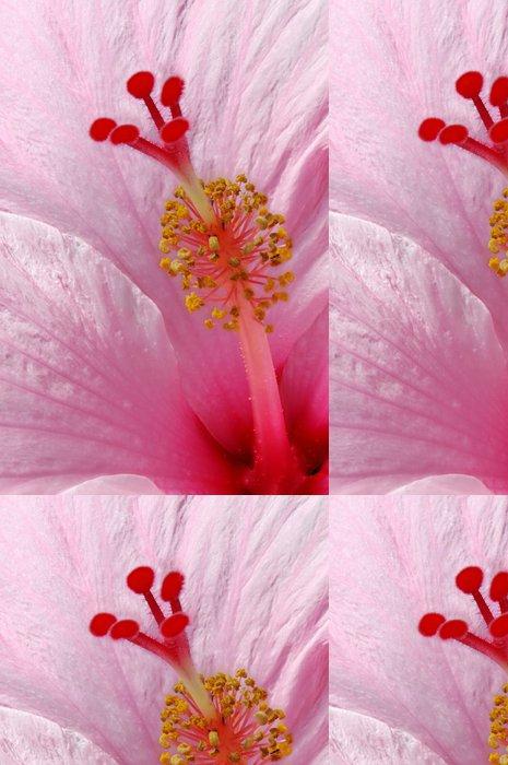 Tapeta Pixerstick Hibiscus rosa-sinensis - detailní údaj o Hibiscus - Květiny