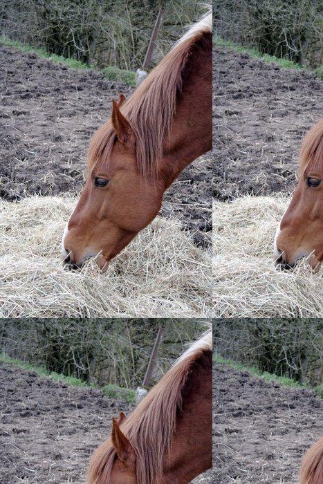 Tapeta Pixerstick Hlava koně - Evropa