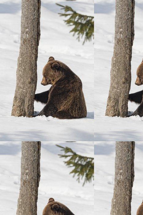 Tapeta Pixerstick Hnědý medvěd grizzly na sněhu pozadí - Témata