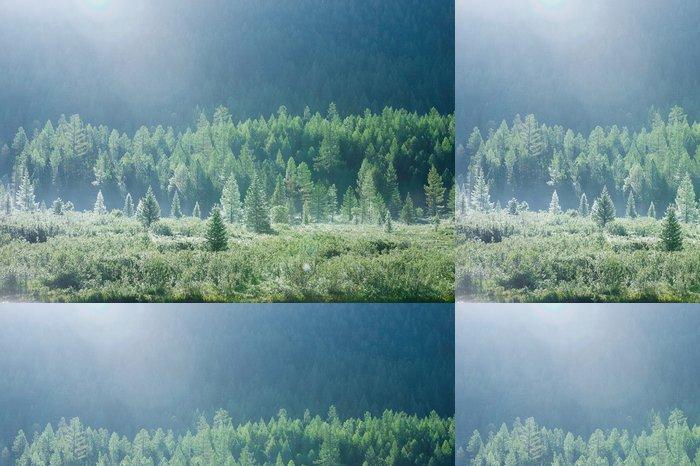 Tapeta Pixerstick Horský les na začátku léta ranní rosa - Hory