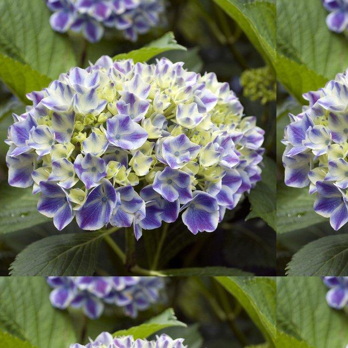 Vinylová Tapeta Hortensie, blau - Květiny