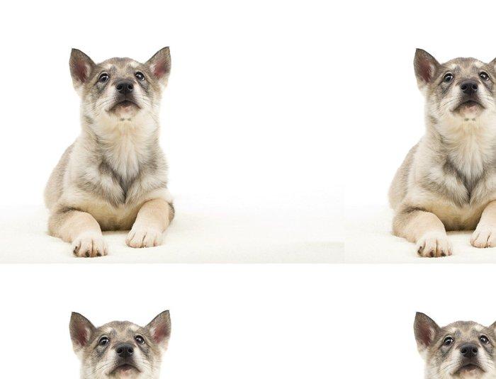 Tapeta Pixerstick Husky štěně hledá do izolovaných na bílém pozadí - Savci