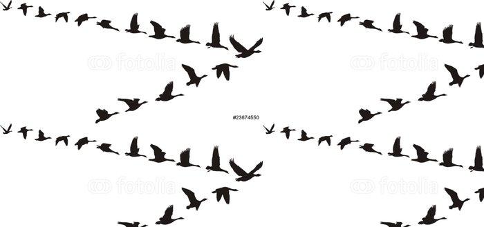 Tapeta Pixerstick Husy podívejte se na V-tvaru - Ptáci