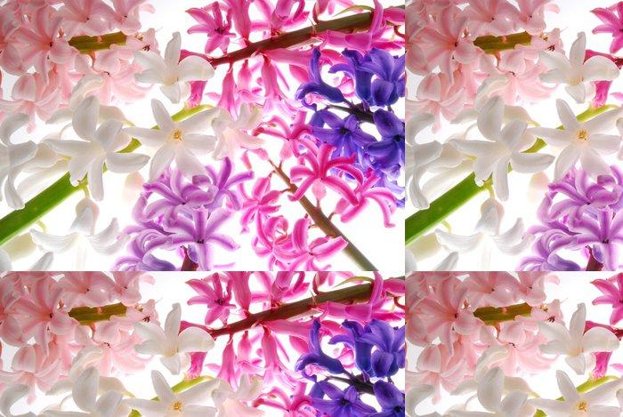 Tapeta Pixerstick Hyacint květy s jinou barvou - Květiny