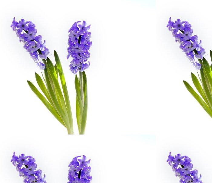 Tapeta Pixerstick Hyacinty - Roční období