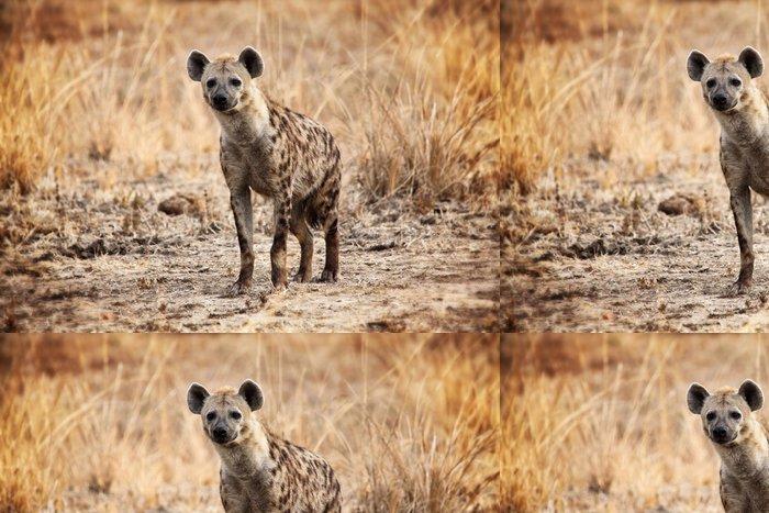 Tapeta Pixerstick Hyena skvrnitá - Afrika