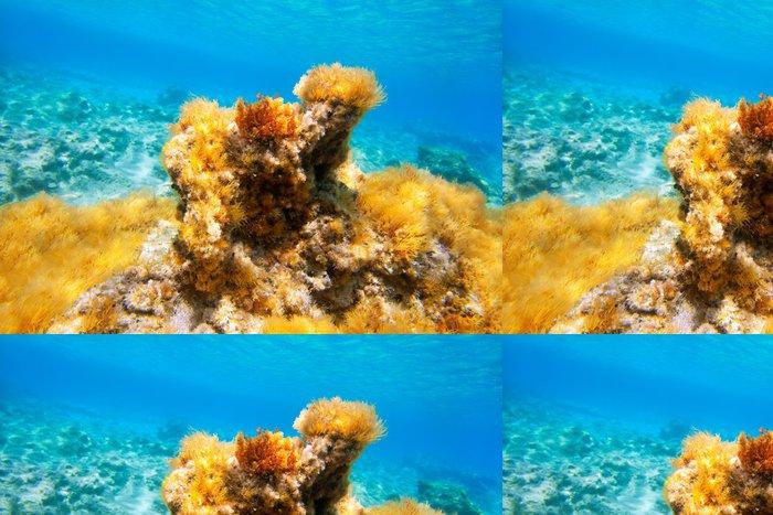 Tapeta Pixerstick Ibiza Formentera sasanka pod vodou přímořská - Podvodní svět