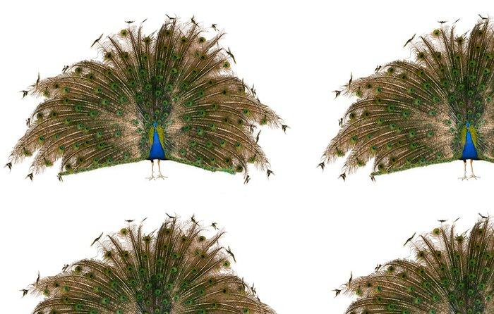 Tapeta Pixerstick Indický páv - Ptáci