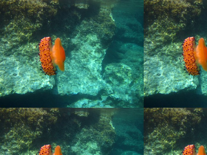 Tapeta Pixerstick Ionian Jellyfish - Savci