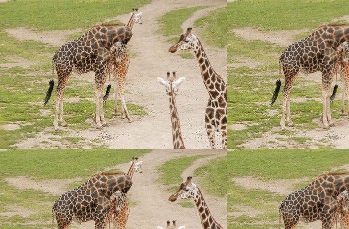 Tapeta Pixerstick žirafy - Témata