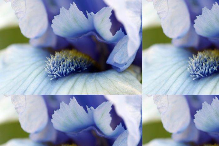 Tapeta Pixerstick Iris květ makro - Květiny