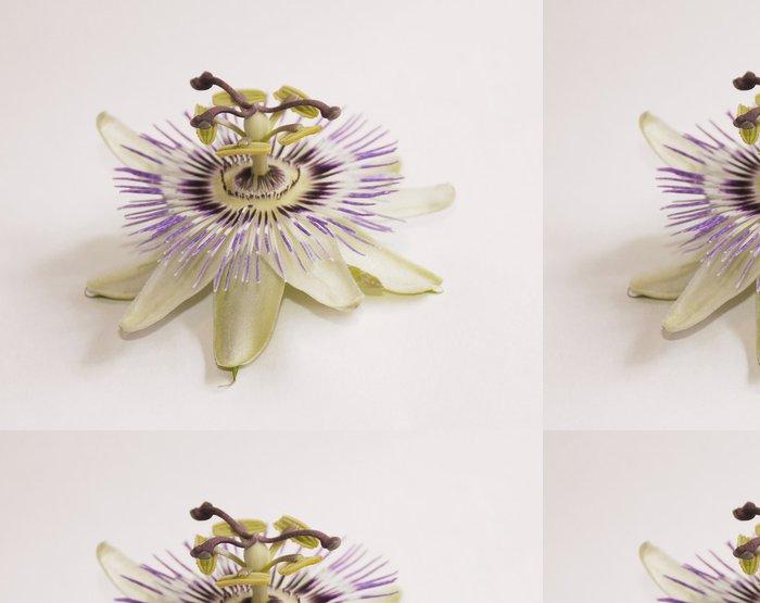 Tapeta Pixerstick Isolated Bluecrown Passiflora - Rostliny