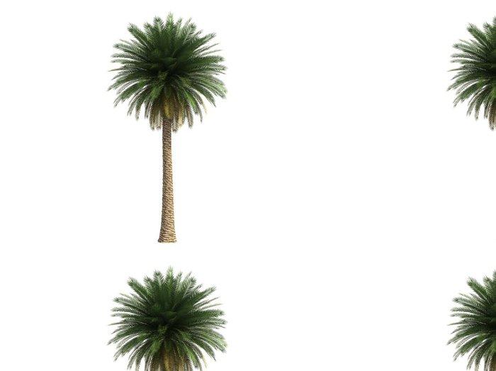 Tapeta Pixerstick Isoslated velký kokosová palma - Nálepka na stěny