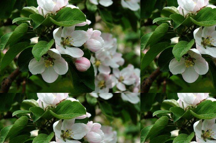Tapeta Pixerstick Jablko květ - Jabloně