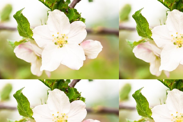 Tapeta Pixerstick Jabloň květ detailní - Domov a zahrada