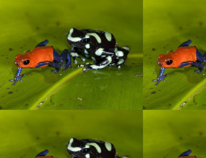 Tapeta Pixerstick Jahody nebo džíny a zelené a černé poison dart frog - Ostatní Ostatní