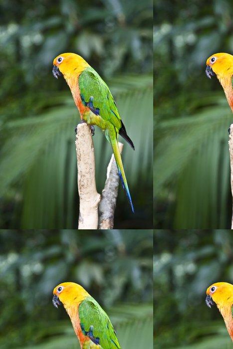 Tapeta Pixerstick Jandaya papoušek Parrot - Ptáci
