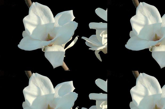 Vinylová Tapeta Japonská magnólie kvetou na černém pozadí - Květiny