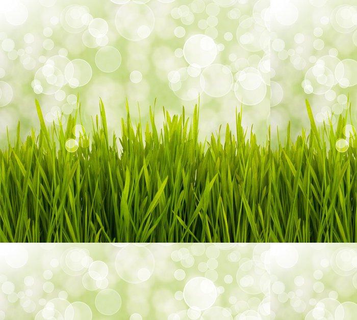 Tapeta Pixerstick Jarní daisy pole. Velikonoční přání pozadí. - Květiny