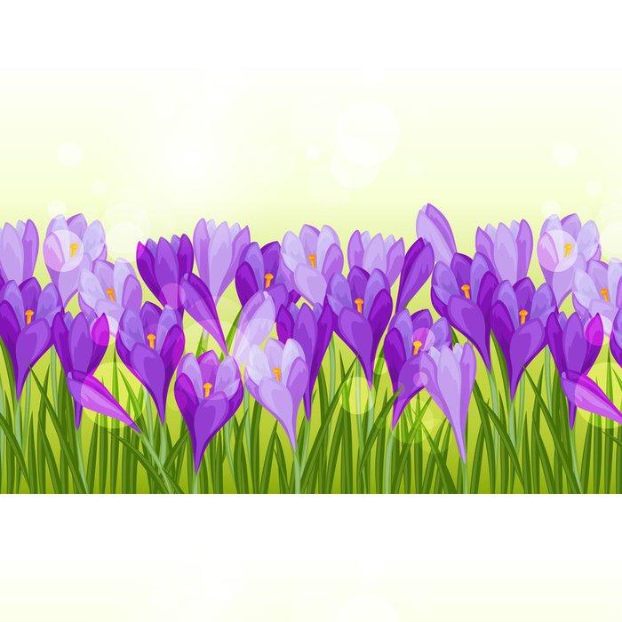 Tapeta Pixerstick Jarní květiny krokus bezešvé vzor horizontální hranice. - Roční období
