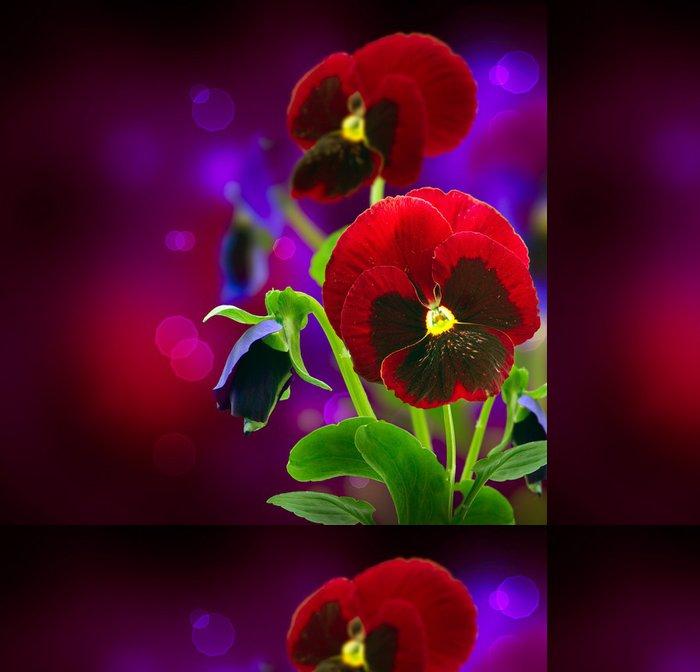 Tapeta Pixerstick Jarní květiny Pansy přes černé - Domov a zahrada