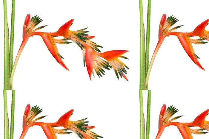 Vinylová Tapeta Jasně oranžová tropické květiny Bird ráje, izolovaných na mák - Květiny