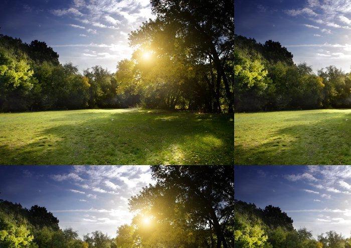 Tapeta Pixerstick Jasné paprsky světla svítí lesem v časných ranních hodinách - Nebe