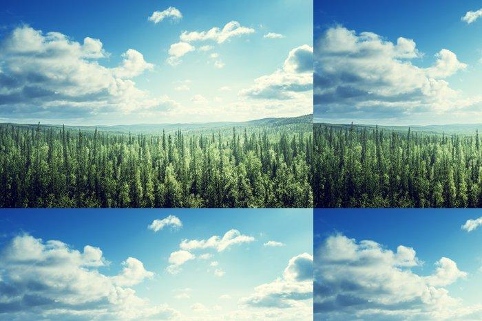 Tapeta Pixerstick Jedle les v slunečný den - Lesy