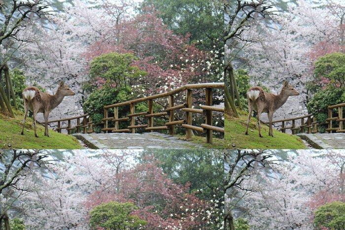 Tapeta Pixerstick Jelen Nara parku - Roční období