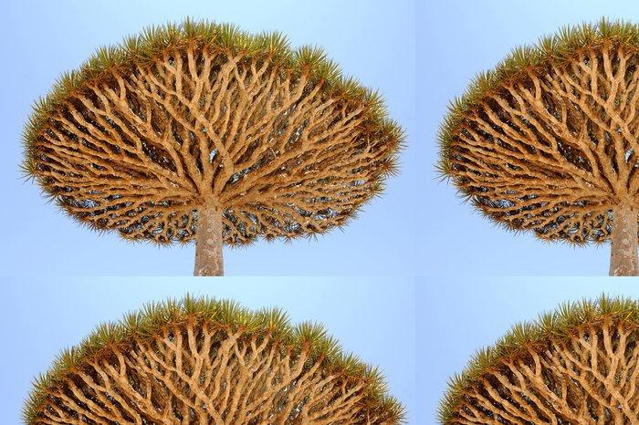 Vinylová Tapeta Jemen. Ostrově Sokotra. Dračí strom - Střední Východ