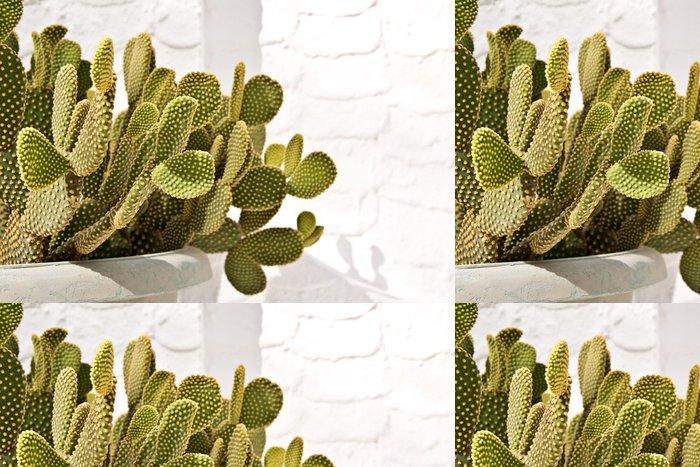 Tapeta Pixerstick Kaktus v květináči - Rostliny