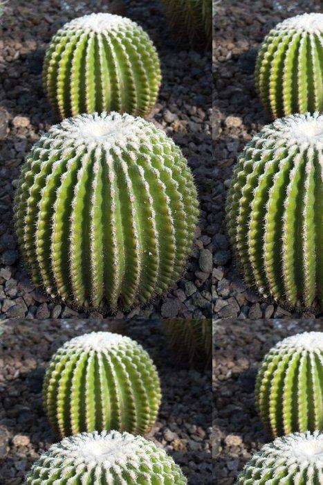 Tapeta Pixerstick Kaktus -