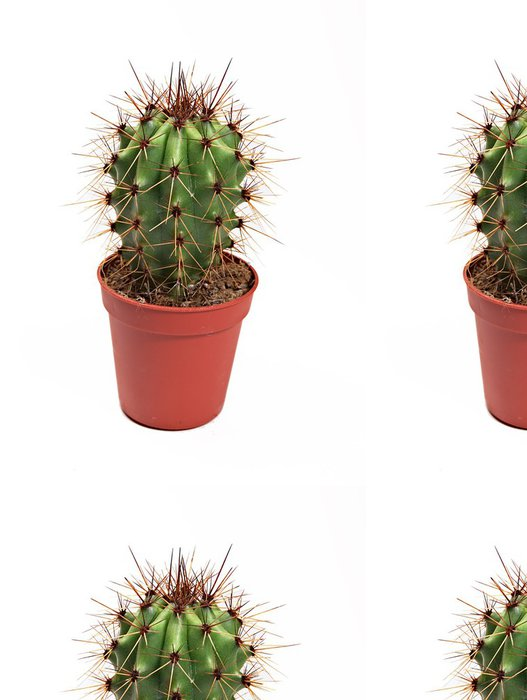 Tapeta Pixerstick Kaktus - Rostliny