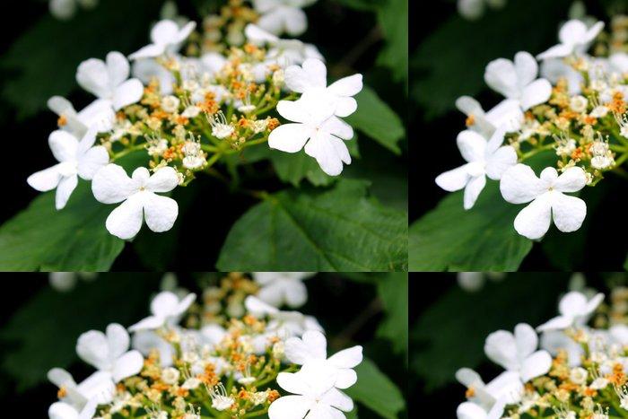Vinylová Tapeta Kalina květ - Rostliny