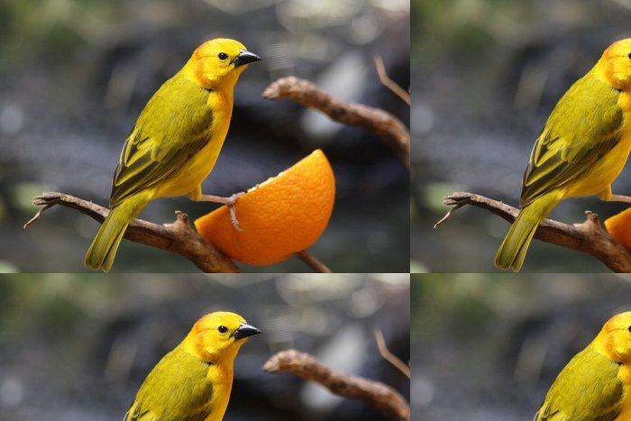 Vinylová Tapeta Kanarienvogel - Ptáci